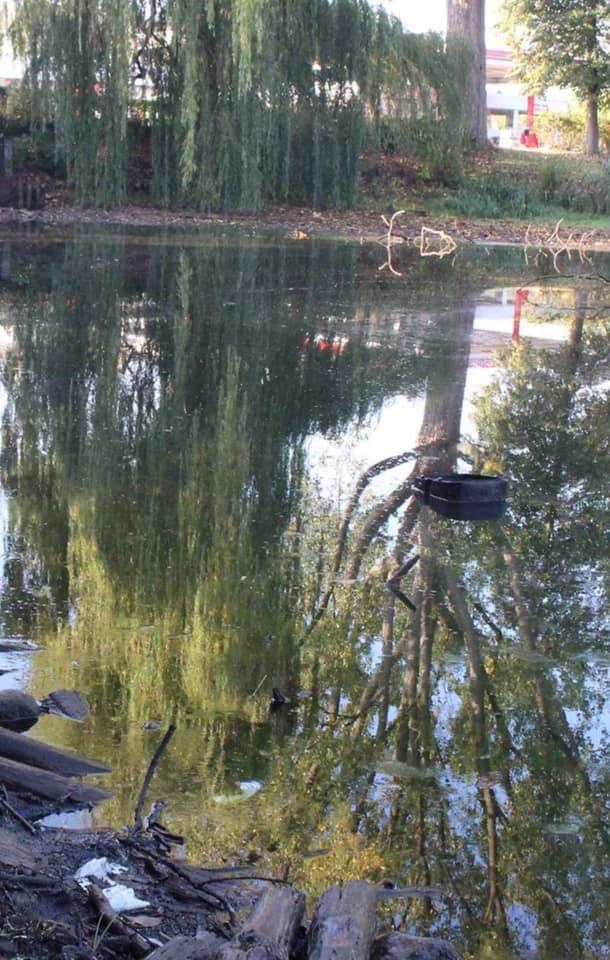 Der Ebstorfer Mühlenteich führt kaum noch Wasser